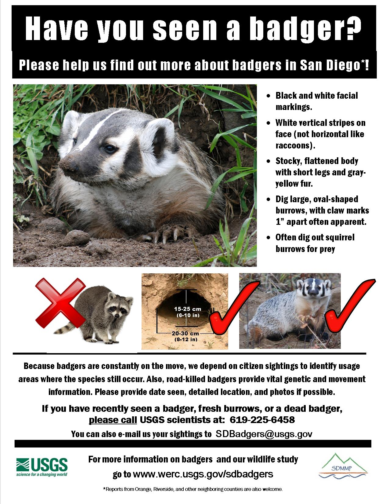 badgers in san diego county